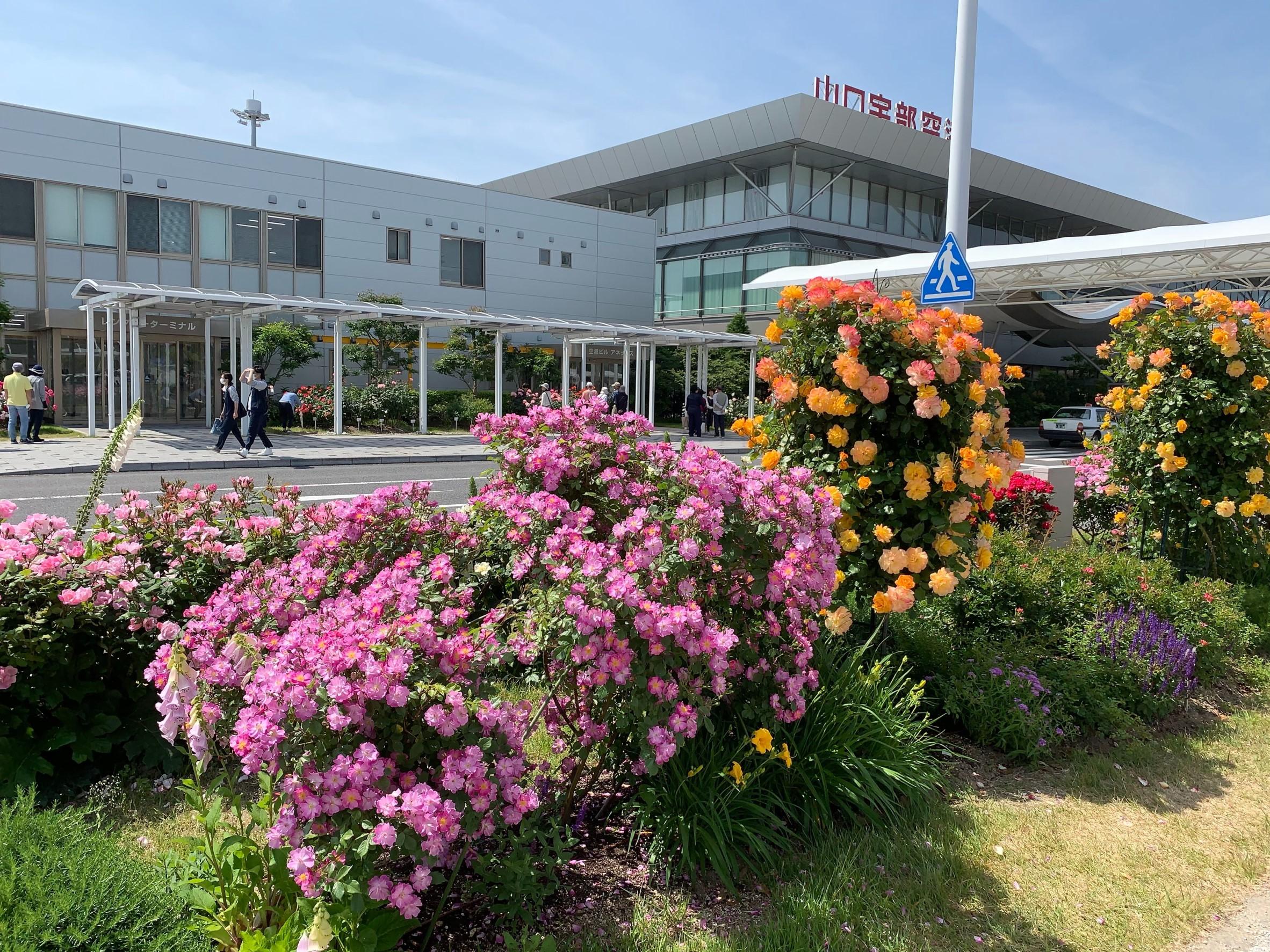 山口宇部空港の薔薇