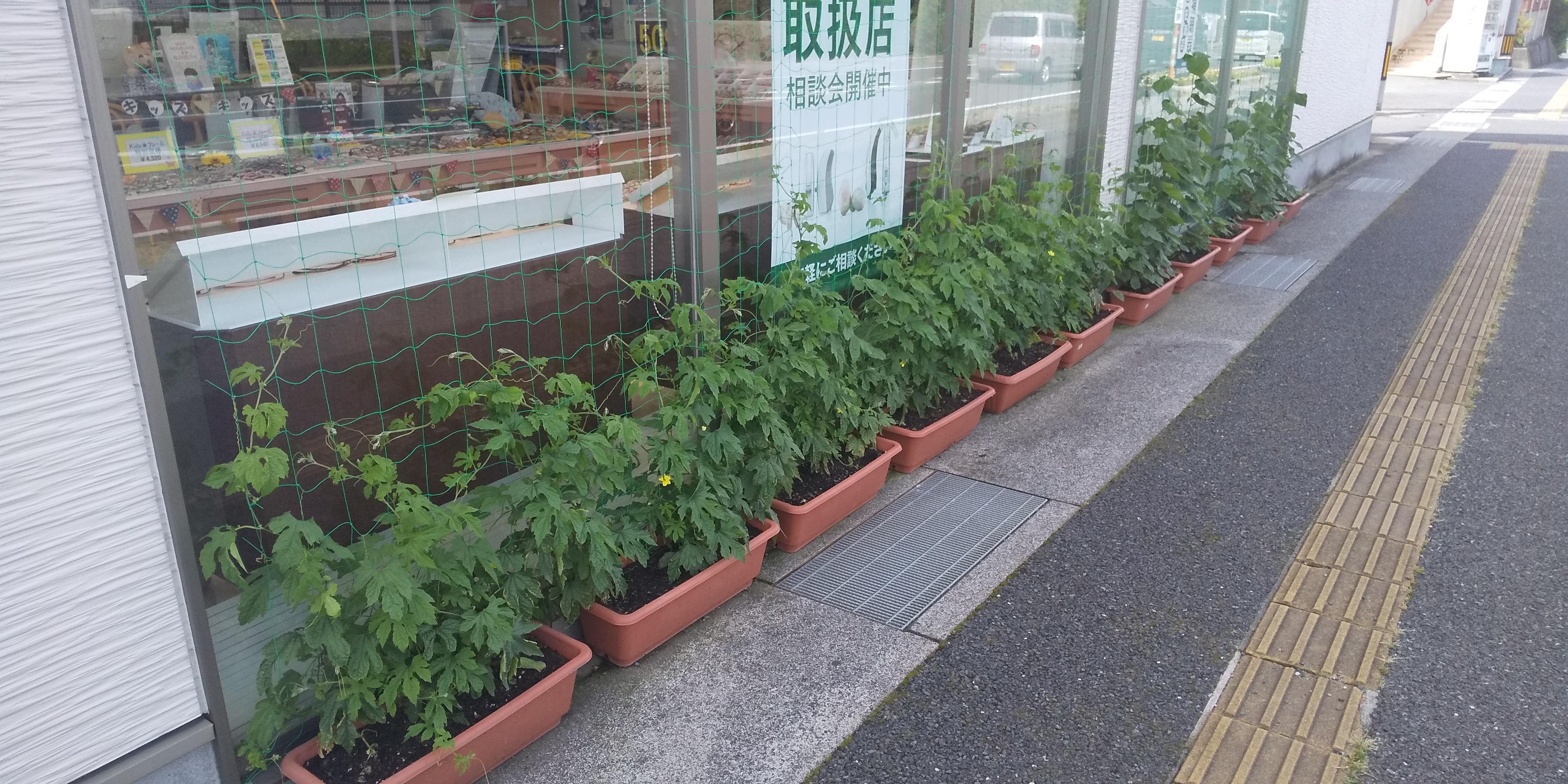 緑のカーテン 西岐波店