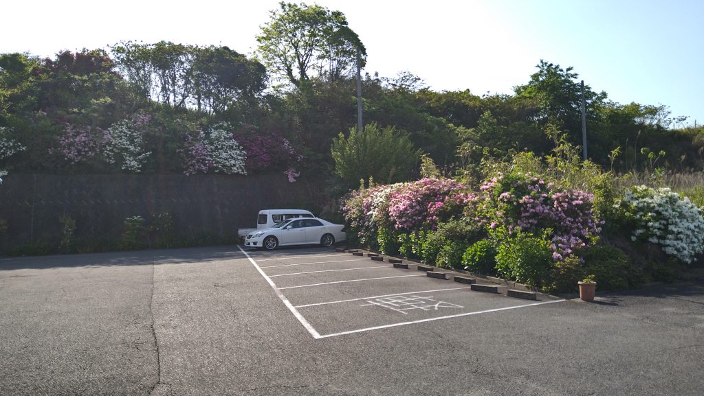 トムフクダ阿知須本店の駐車場周りのつつじが咲きました。